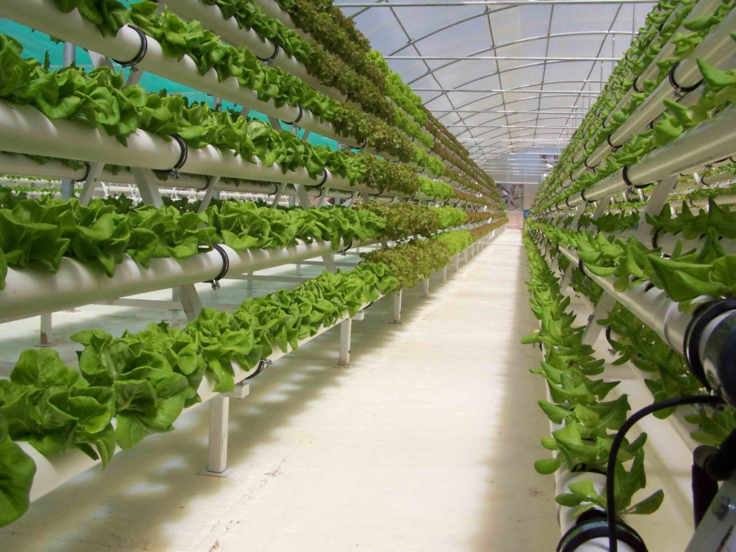 Shaping What's Next | The Future of Agriculture