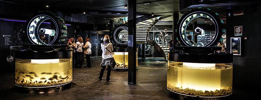 Padiglione del Belgio a Expo 2015