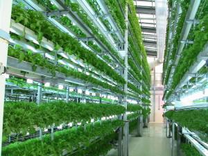 view-of-hydroponics-rgs-machines